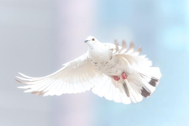 飛んでいる白い鳩
