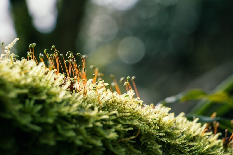 光を浴びる苔
