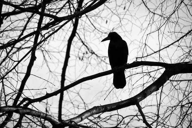 枝に止まったカラスの影