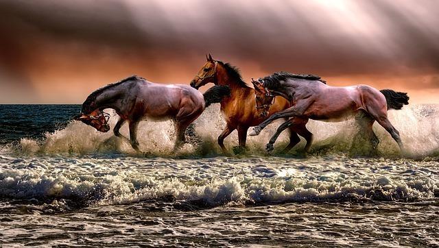 勢い良く海を渡る馬