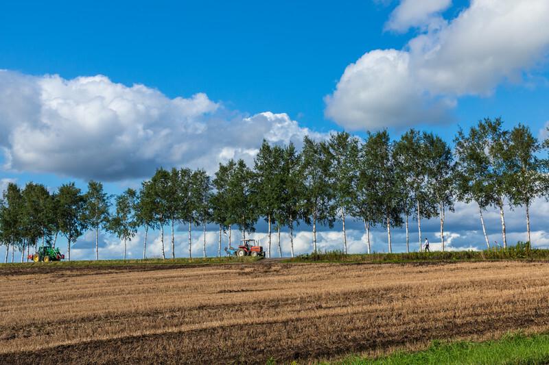収穫の後の畑