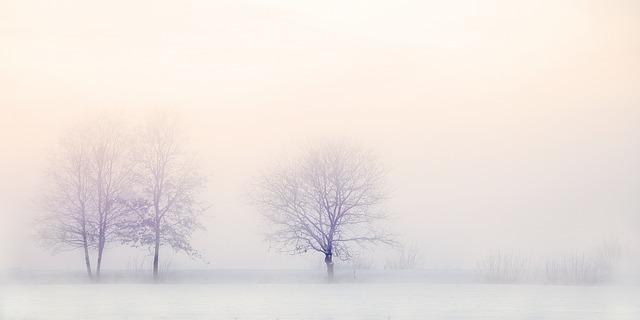 雪の中の木立