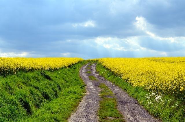 黄色い花が両脇に咲いている道