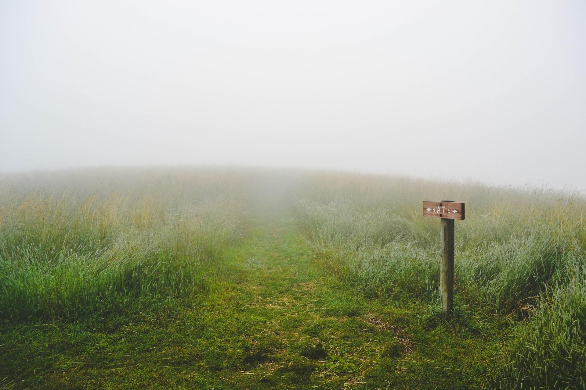 霧が立ち込めた草原