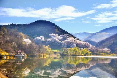 湖面に写る桜
