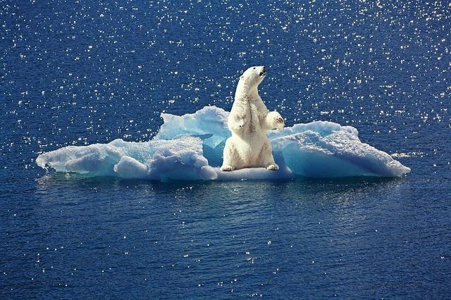 氷山の上に立つシロクマ