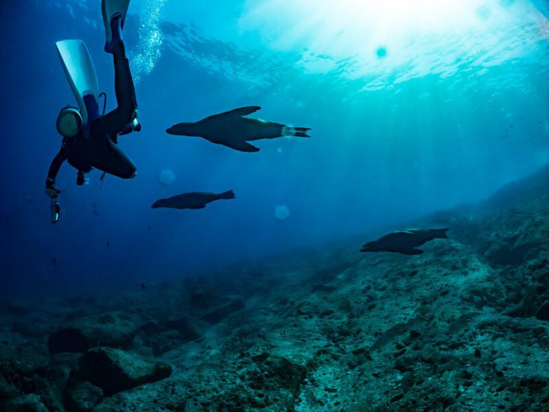 海の中を泳ぐ人