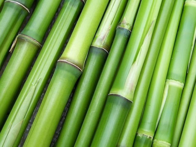 太さの違う竹が並べてある
