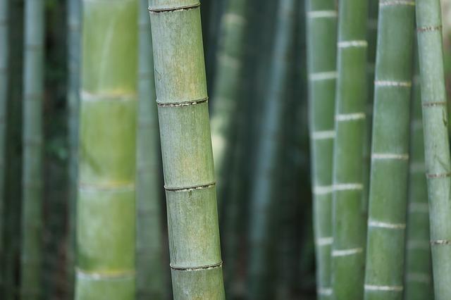竹林の竹をズームアップして竹がよく見える画像