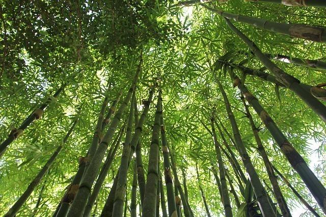 竹林を下から上に見上げた写真