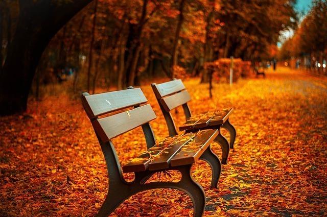紅葉と道端に並ぶ二つのベンチ