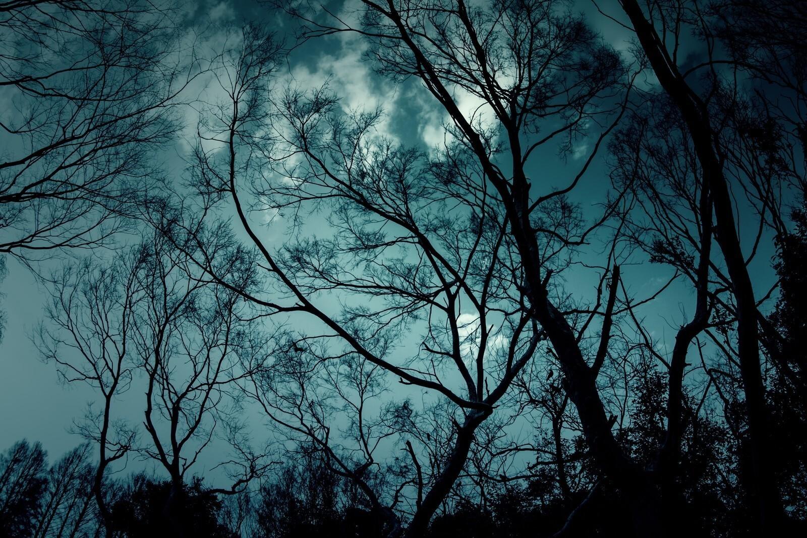 魔物が現れそうな不気味な森