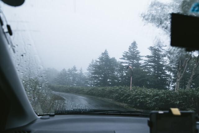 森を駆け抜ける一台の車