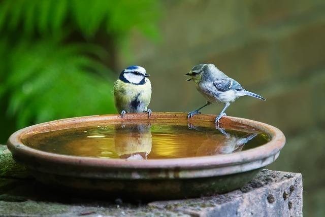 水を張った鉢に止まる鳥たち
