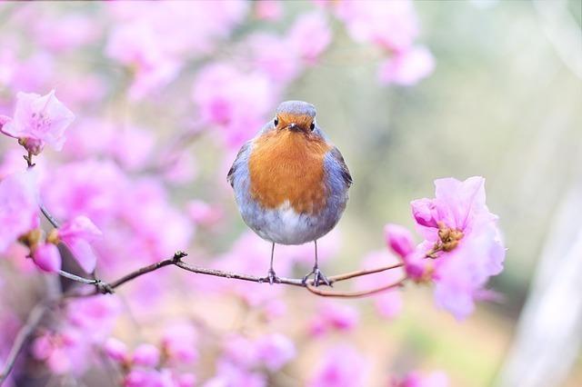 梅の花に止まった一羽の鳥