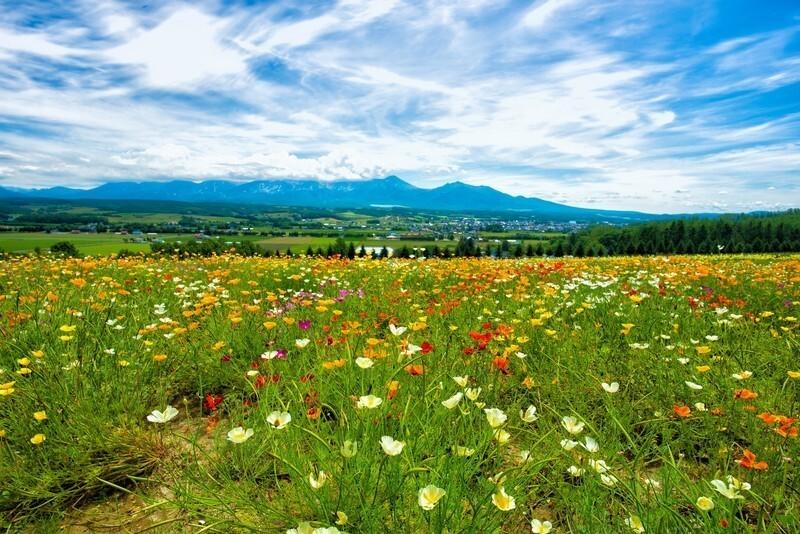 晴れた日の花畑