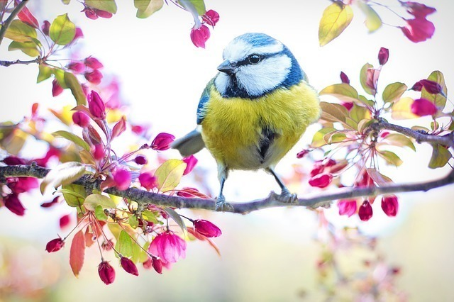 木にとまる鳥