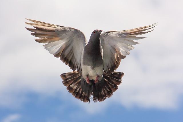 空高く舞う鳥