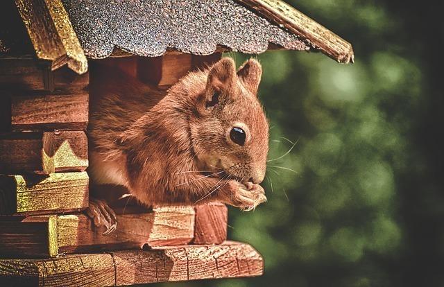 リスが巣から身体をだして餌を食べているところ