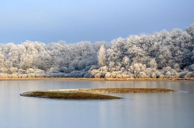 中島のある池と、木々が霜で白くなっている