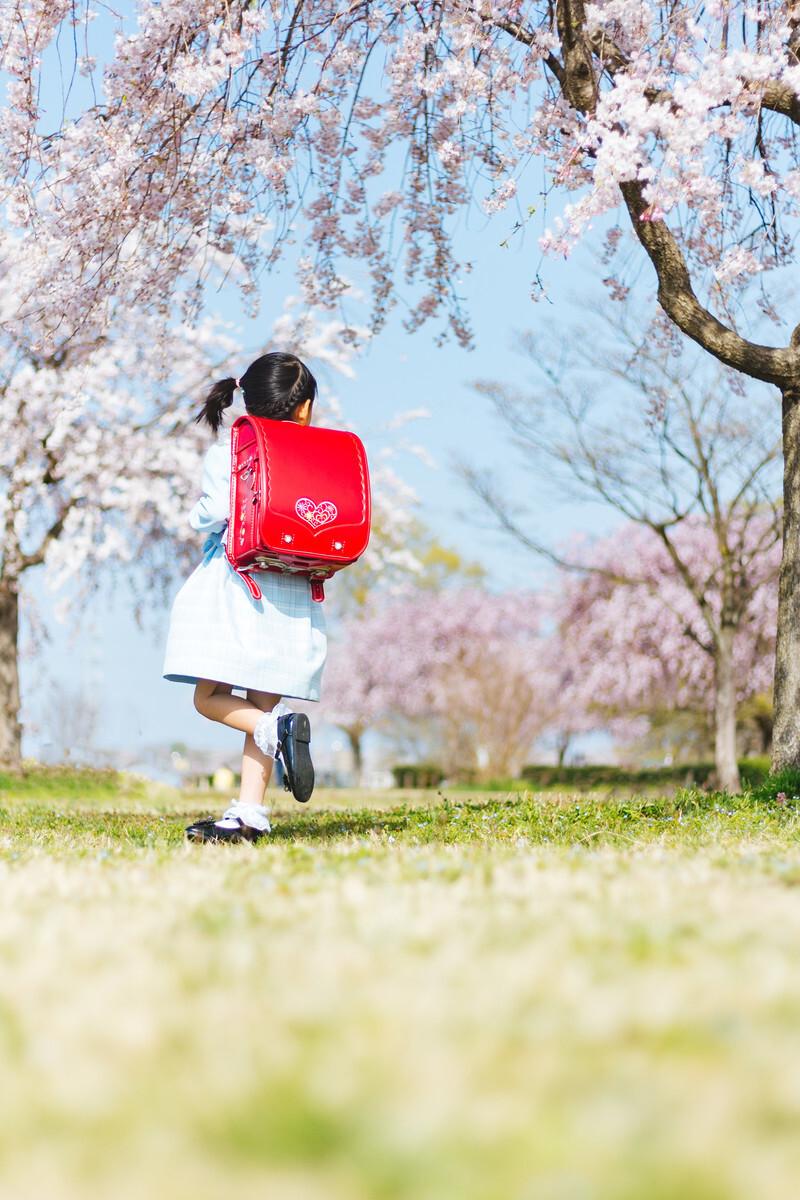 赤いランドセルを背負った女の子が桜の木の下を走っている画像