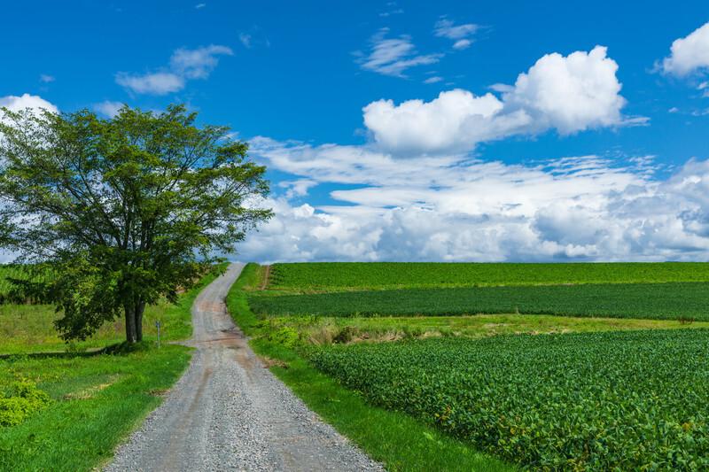 緑の畑に開ける道と広がる青空の画像