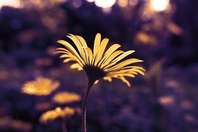 黄色い花の額と花びらが見える画像