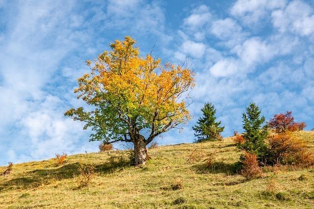 薄く色づいた草原にある木