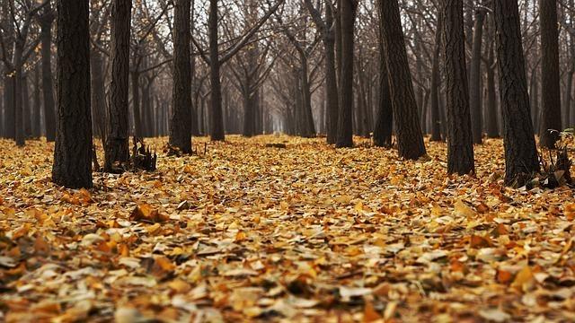 林に広がる一面の落ち葉