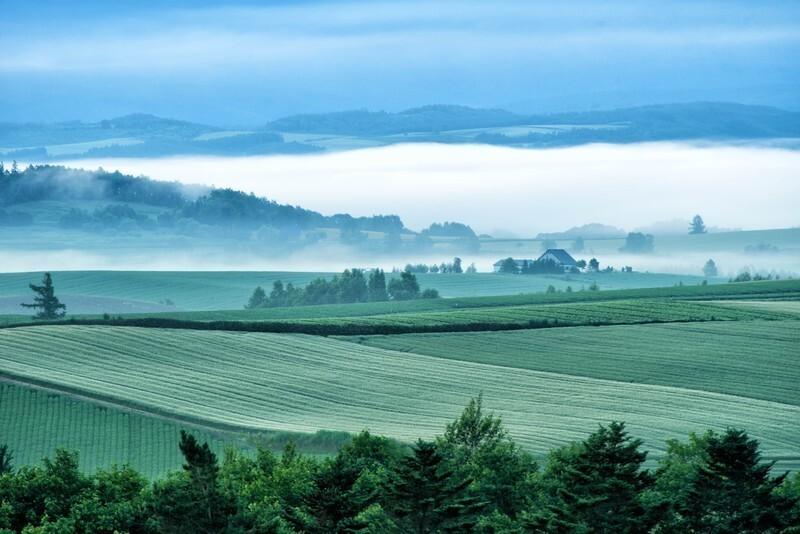 一面に緑の植物が広がり、遠くは霧がかっている