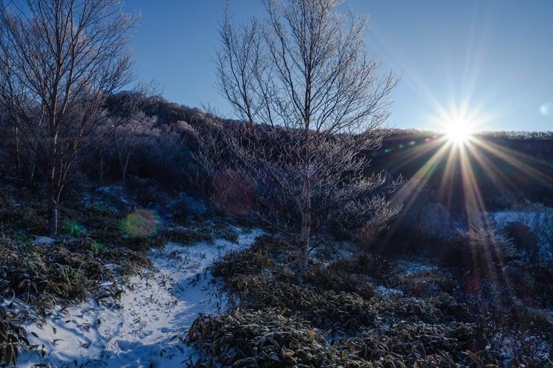 枝だけになった木々と雪が積もっている地面に太陽の光が当たっている