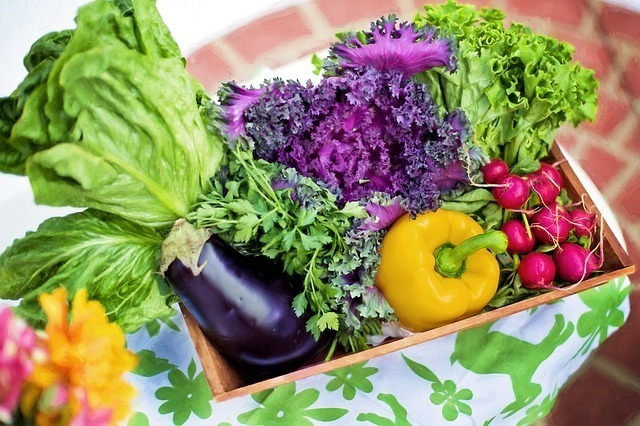 美味しそうな夏野菜