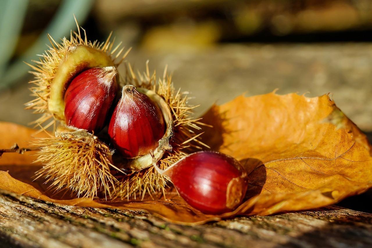 食欲の秋と栗