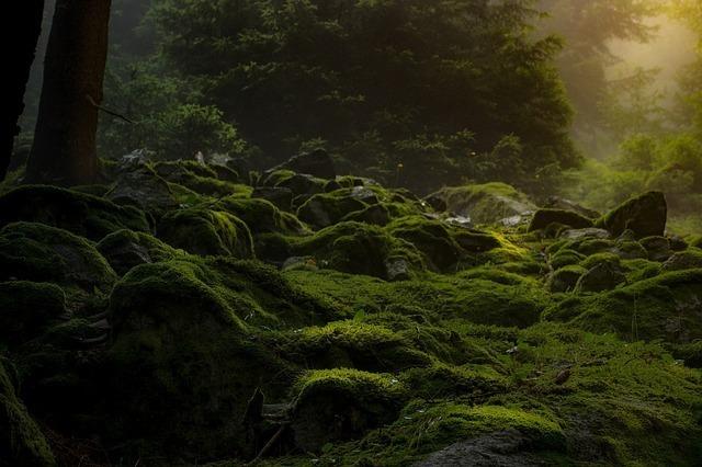 闇夜の草木の生い茂った森