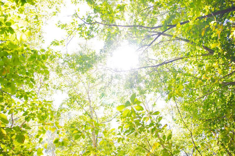 心地よい木漏れ日
