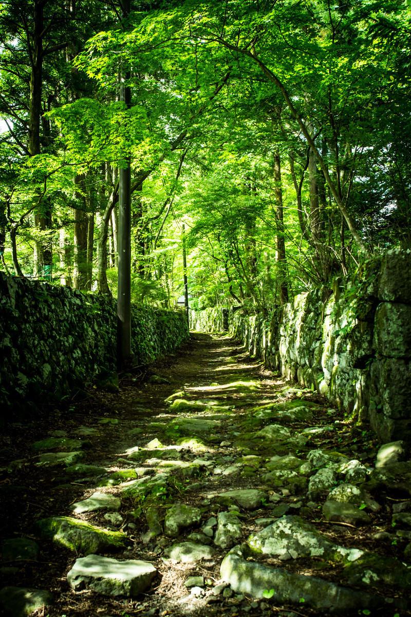 緑深い林道