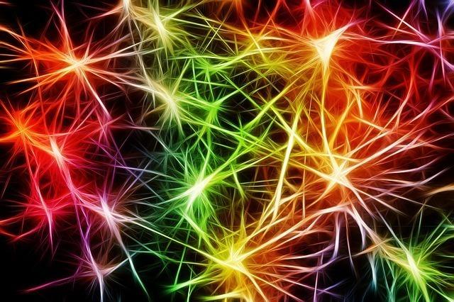 頭脳の中 ニュートロンの活性