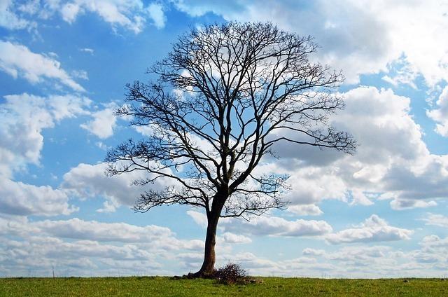 白い雲と枯れた木