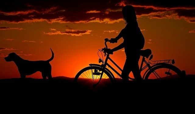 自転車と犬のシルエット
