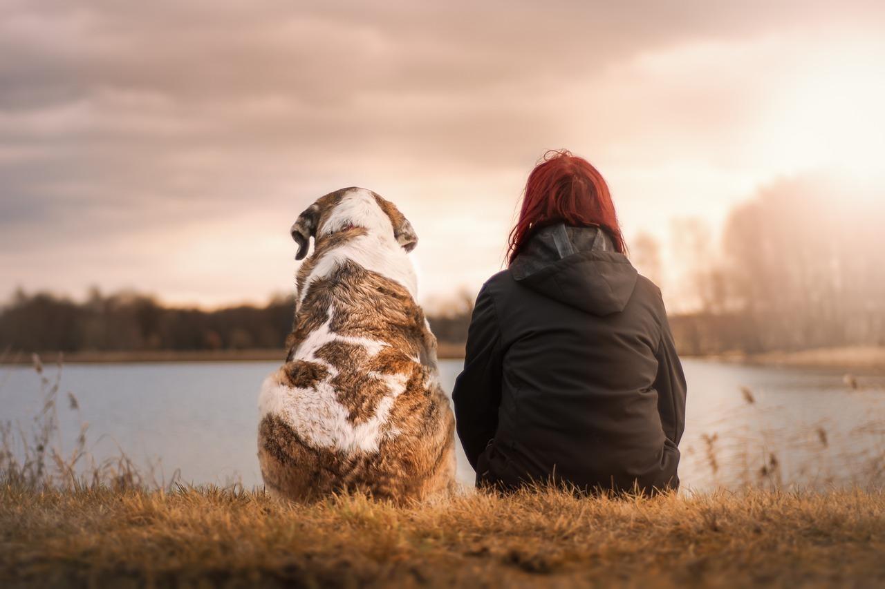 犬と夕陽を眺める女性