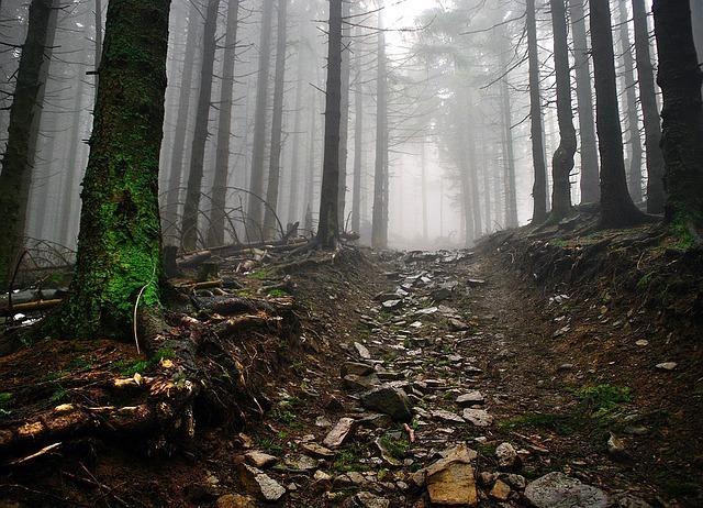 霧の立ち込める荒れた山道