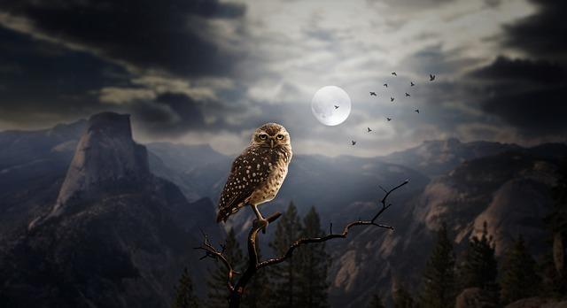 夜行性のフクロウ