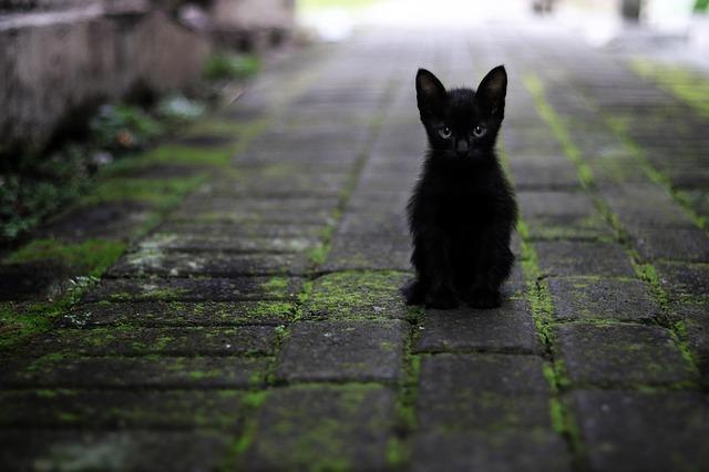 路頭にたたずむ黒猫