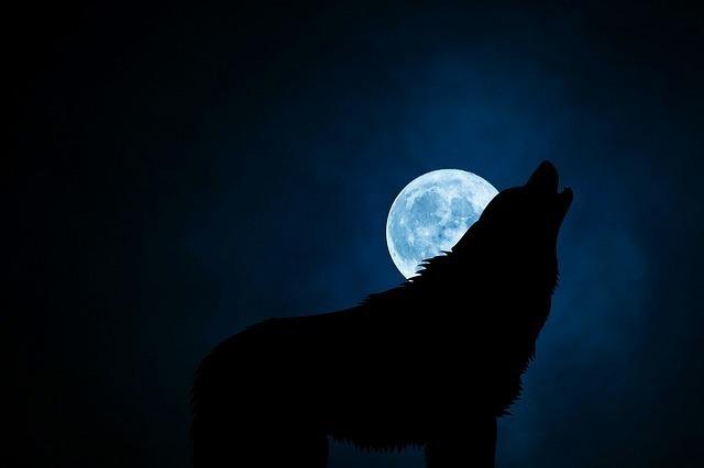 月夜に吠えるウルフマン(狼男)