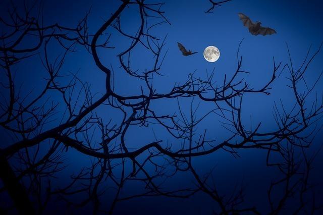 宵闇に照らされるコウモリの影