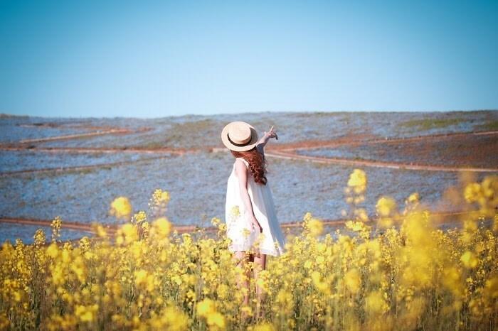 黄色の花に囲まれて立つ少女の後ろ姿