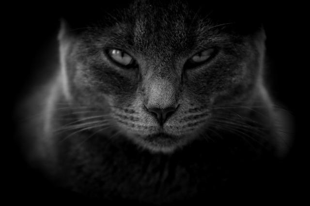 真っ黒な毛並みの猫
