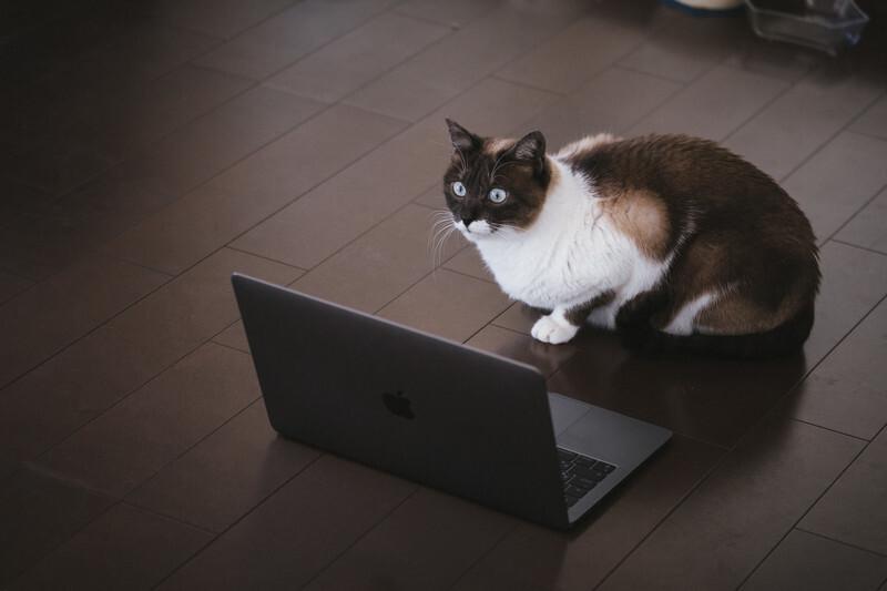 パソコンが気になる猫