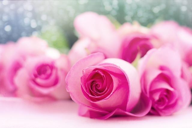 柔らかなピンクのバラ
