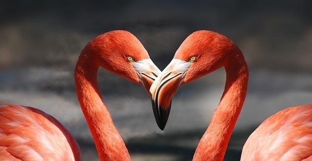蟹座でO型の女性の恋愛傾向⑴ : 尽くす事に幸せを感じるタイプ